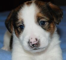 Baby JRT by Emma Hardcastle
