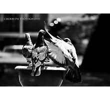 Pigeon Perch Photographic Print