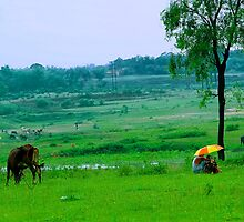 The Life on A Rainy Day #3 by Mukesh Srivastava