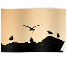 Sunset -Pacific Grove California Poster