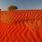 Sundown,Simpson Desert by Joe Mortelliti