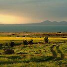 Corio Bay by Joe Mortelliti