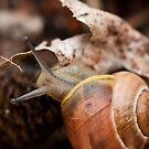 Snails See the Beauty in Every Inch by David Friederich