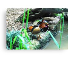 Mandarin Ducks - Male and Female Canvas Print