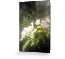 apple blossoms #2, focal black and white Greeting Card