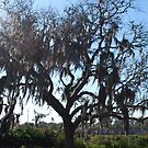 Tree from the Bayou by Colleen Rohrbaugh