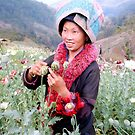 Happy opium poppy farmer by John Spies