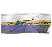 English Lavender Field Poster
