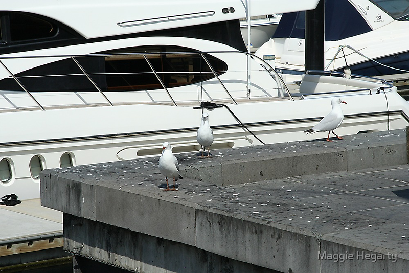 Come aboard the seagulls said by Maggie Hegarty