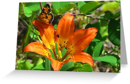 Tiger Lily and Butterfly by MaeBelle