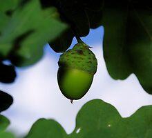 Green Oak by Marcus Walters
