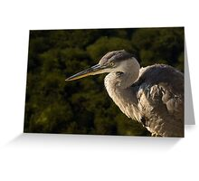Focused Hunter - a Great Blue Heron Watching for Fish Greeting Card