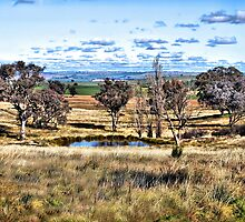 country scene Cowra Road Grenfell nsw by geoffgrattan