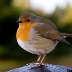 Robin Red Breast by Marcus Walters