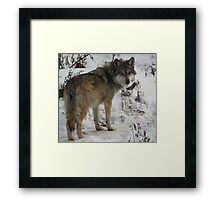 Who you looking at?? Framed Print