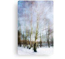 Winter Silver Birch Trees Metal Print