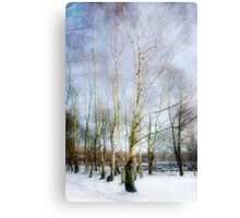 Winter Silver Birch Trees Canvas Print