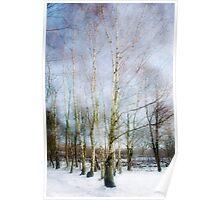 Winter Silver Birch Trees Poster
