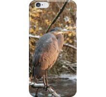 Great Blue Heron in Winter iPhone Case/Skin