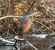 Great Blue Heron in Winter by THurdCreations