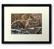 Great Blue Heron in Winter Framed Print