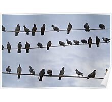 Pigeons on the wire Poster