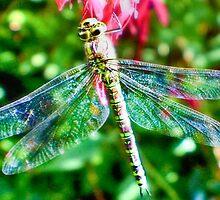 Gossamer Wings by missmoneypenny