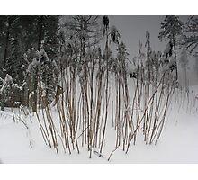 Winter In Sweden Photographic Print