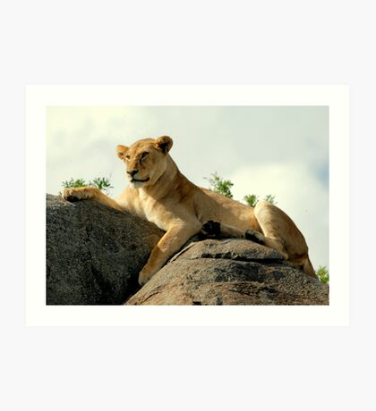 Majestic Cat of Africa Art Print