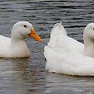 Quackers by Regenia Brabham