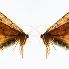 Insect Wings Macro - Profile by melmoth