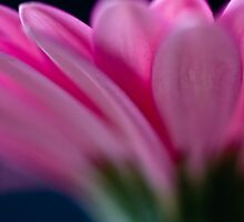 Petals by Marcus Walters