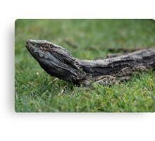 Lizard on Grass Canvas Print