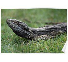 Lizard on Grass Poster