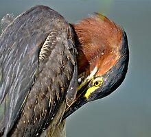 Green Heron Pruning by imagetj