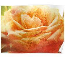 Painting Cream Rose. Poster