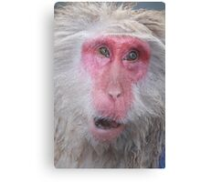 Wise old snow monkey, Japan Canvas Print