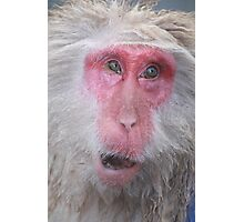 Wise old snow monkey, Japan Photographic Print