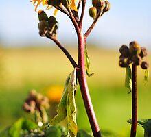 Floral simfonijas 2 by Rita Analise Kaulina