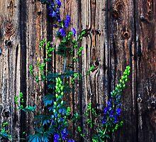 Floral simfonijas 5 by Rita Analise Kaulina