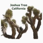 Joshua Tree California by Imagery