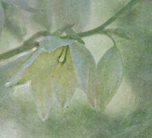 Silent adoration by Maria Ismanah Schulze-Vorberg