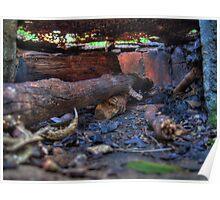 BBQ Inside - Blackbutt Nature Reserve Poster