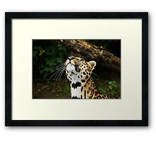 Wonder what is up there Framed Print