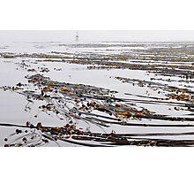 Fields of Kelp Photographic Print