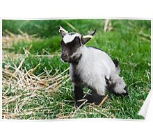 Young Pigmy Kid with ear rings  Poster