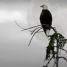 The eagle has landed by Darren Bailey LRPS