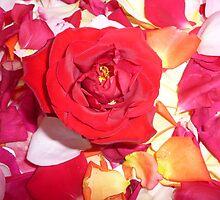 La Vie en Rose by hangwilliamson
