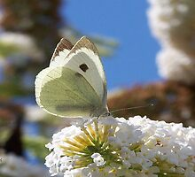 Pretty White Butterfly  by LoneAngel