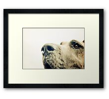 Eye of a Dane Framed Print